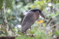 bird-940181_960_720