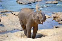 baby-elephant-267124_640