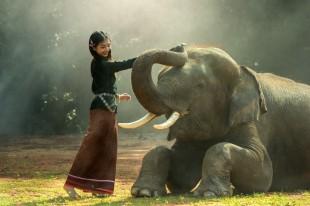 nature-black-and-white-girl-wildlife-africa-mammal-1271118-pxhere.com