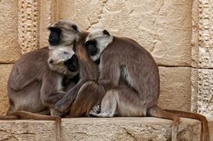 primates-3586536_640