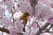 bird-3861072_960_720