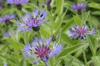 flower-2852675_640