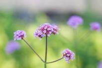 flower-287072_640