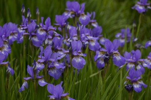 flower-3479488_640