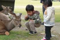 japan-1720019_960_720