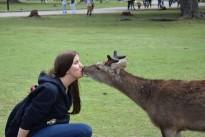 roe-deer-2520275_960_720