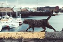 cat-2570486_640