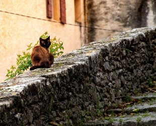cat-3841061_640