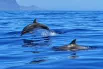 dolphin-2691864_640