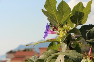 flower-1204849_640
