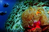 058 - Anemone, Anemonefish & Divers