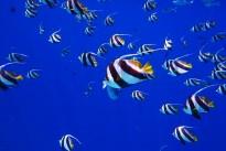 fish-2733323_640