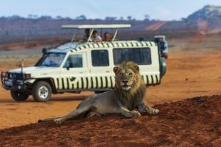 lion-3940977_960_720