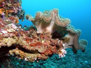 maldives-1268661_640