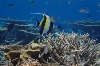 maldives-2070759_640