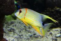 reef-1758132_640