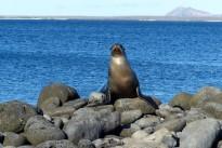 Galapagos X021