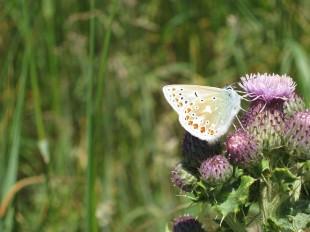 butterfly-961589_640