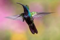 hummingbird-1854225_640