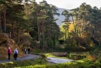 medium-Glenveagh National Park 29
