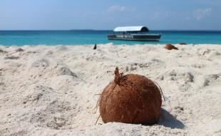 coconut-1577282_960_720