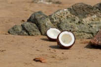 An offering of coconuts